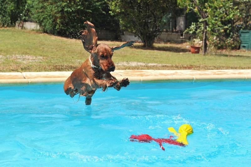 Hund im Pool