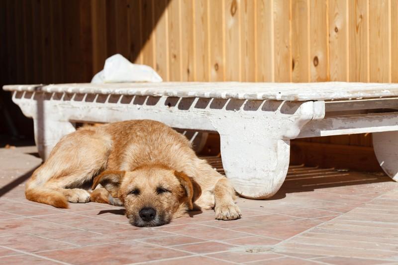 Hund badet in der Sonne