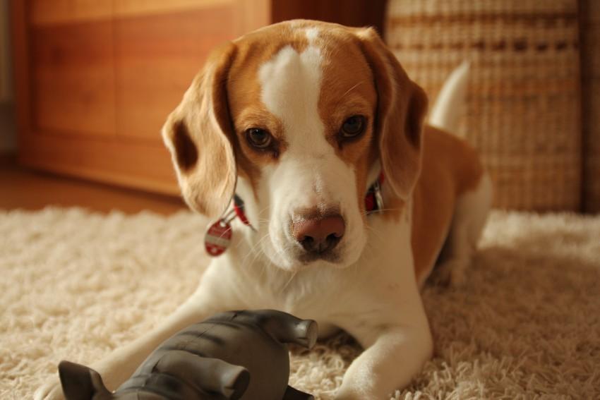 Schon auf den Hund gekommen? – Tipps für ein harmonisches Zusammenleben