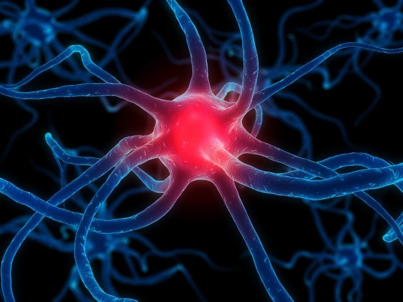Neuron Nervensystem