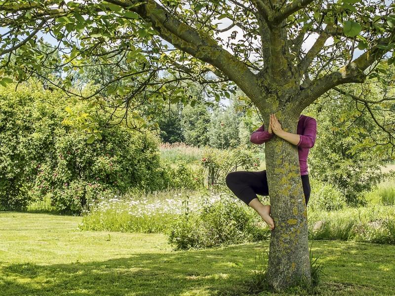 Natur Entspannen Zen