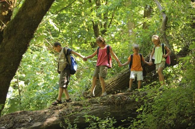 vier Kinder balancieren über einen Baumstamm im Wald