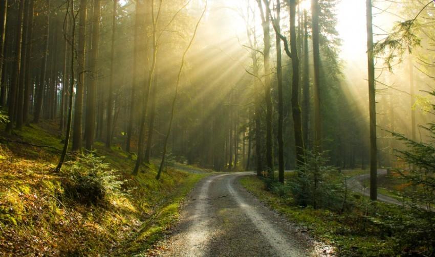 Der bayerische Wald in all seiner Pracht. Immer einen Besuch wert.