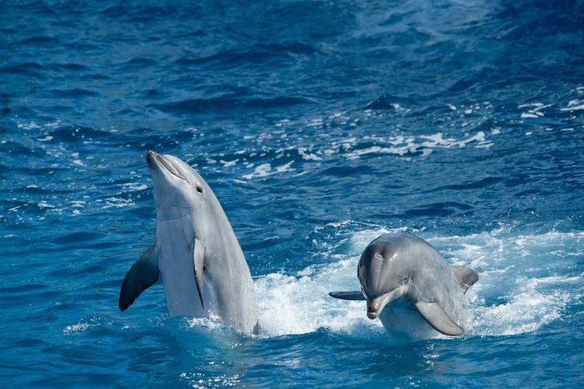 Delfine in freier Wildbahn - mehr Spaß für die Meeressäuger und Kinder.